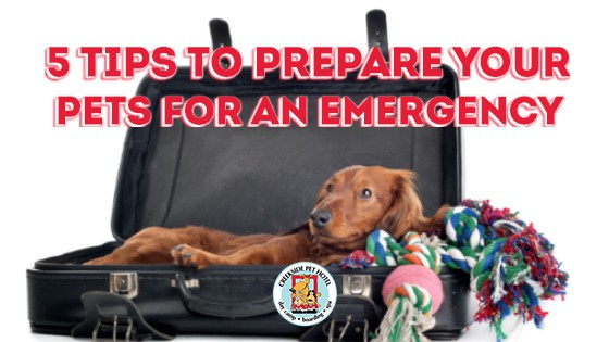 Long-haired brown dachshund in a suitcase with Pet Emergency Preparedness Text