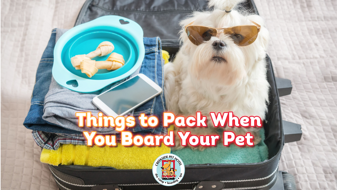 Cute White Dog in Suitcase with sunglasses