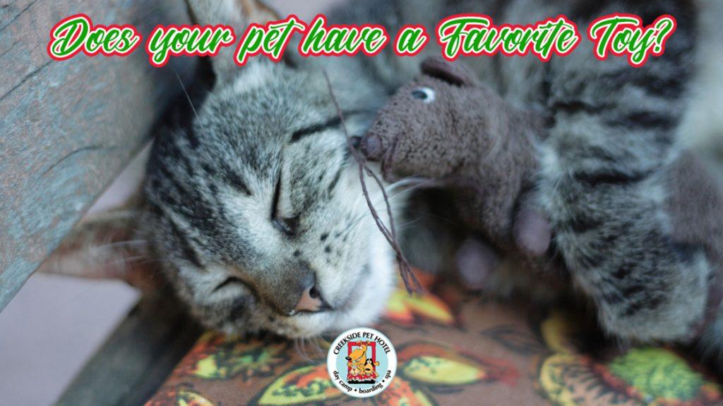 Sleeping cat hugging toy