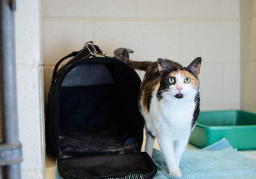 Cat (Kitten) (1)