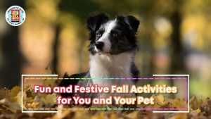 black white collie dog playing in fall leaves