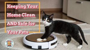 cute cat playing with robot vacuum