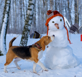 dog playing with snowman